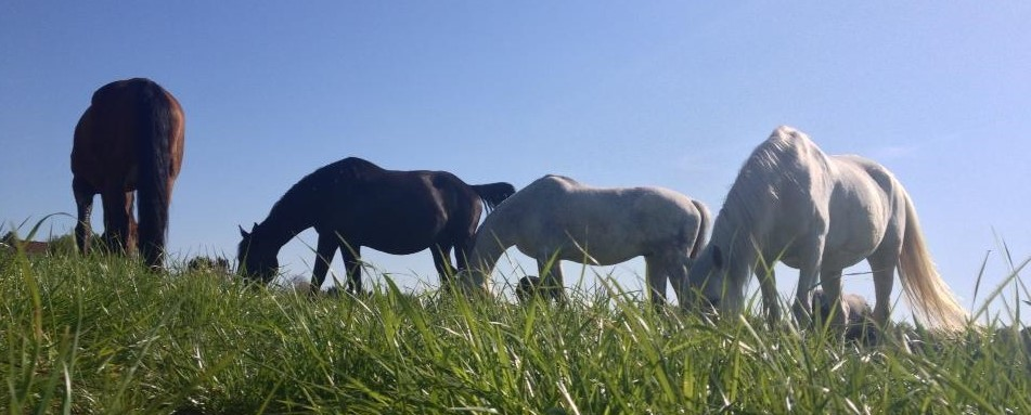 constellatuions chevaux
