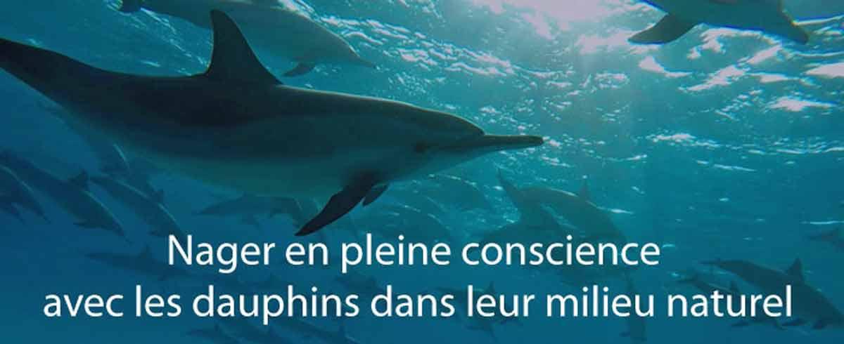 dauphins-12052017