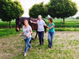 chevaux atelier